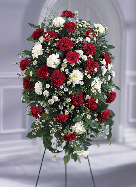 Red and White Carnation Family Flower Package