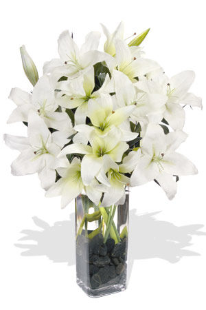Ivory Oriental Lilies