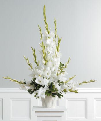 Just pure white gladiolus mightylinksfo